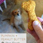 Pumpkin and Peanut Butter Dog Treat with golden retriever puppy