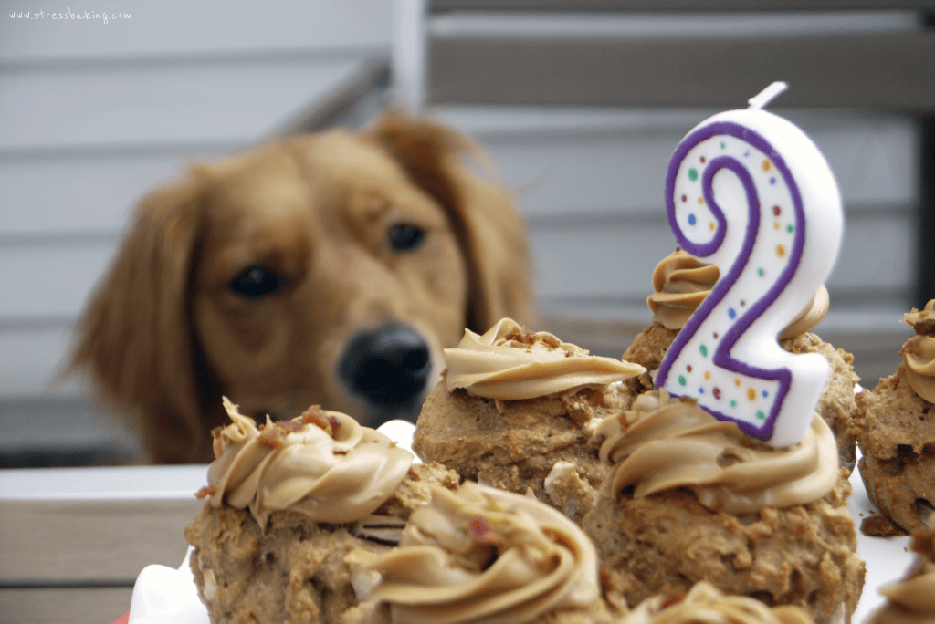 Apple Pupcakes: A special treat your dog will love that is DEFINITELY Penny Approved! Chunks of fresh apples, creamy peanut butter and bacon crumbles will make your furbaby as happy as Penny. | stressbaking.com