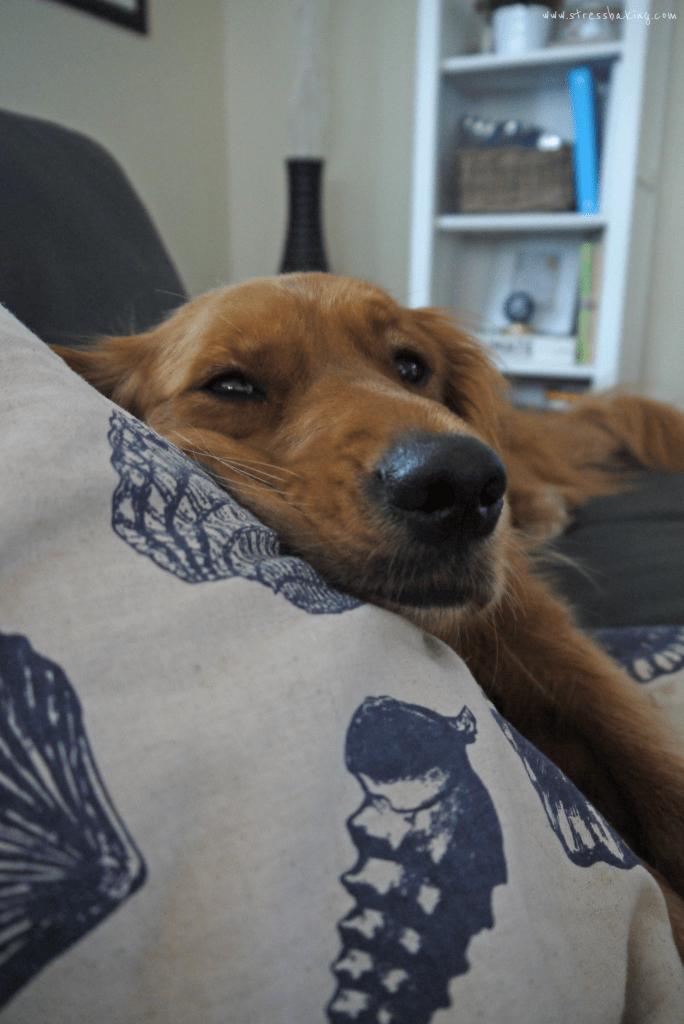 Sleepy Penny | stressbaking.com