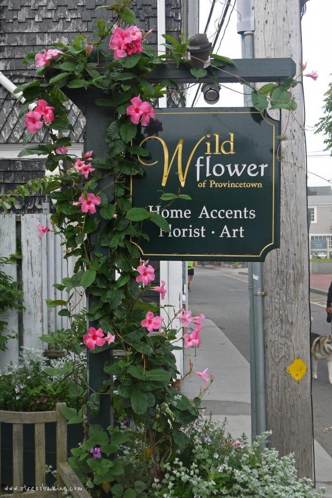 wild-flower-provincetown