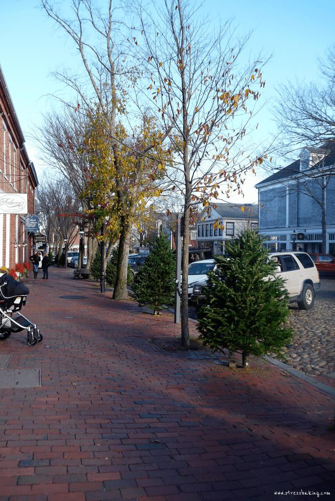 Nantucket Christmas trees