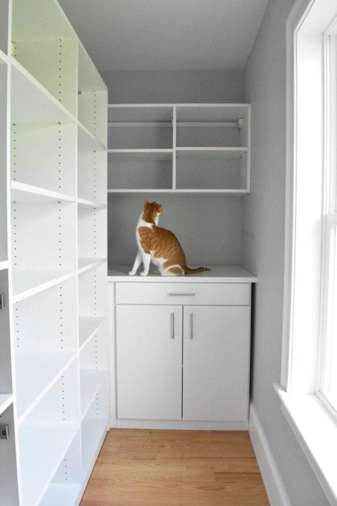 cat exploring pantry