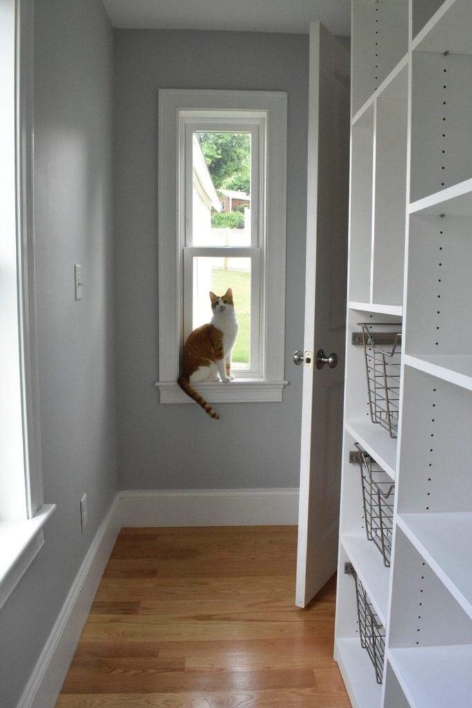 cat in pantry window